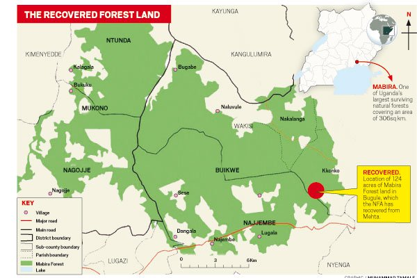 The Recovered Forest Land