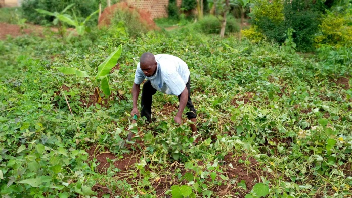 A-small-holder-farmer-clearing-his-garden.